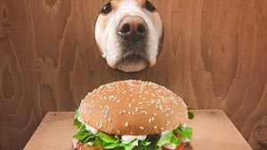 The Whopper Dog